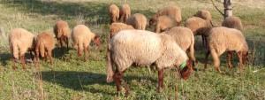 Association Moutonte Eco Satolas-et-Bonce